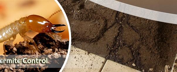 termite-gurgaon